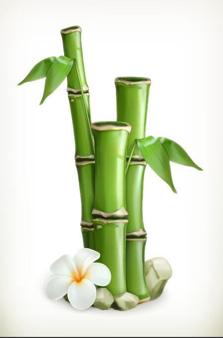Bamboo with white flower vector