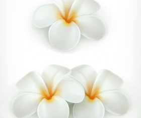 Beautiful white flower vector illustration 01