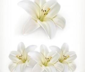 Beautiful white flower vector illustration 02