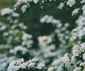 Beautiful white flowers Stock Photo