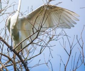 Beautiful wild birds Stock Photo 11