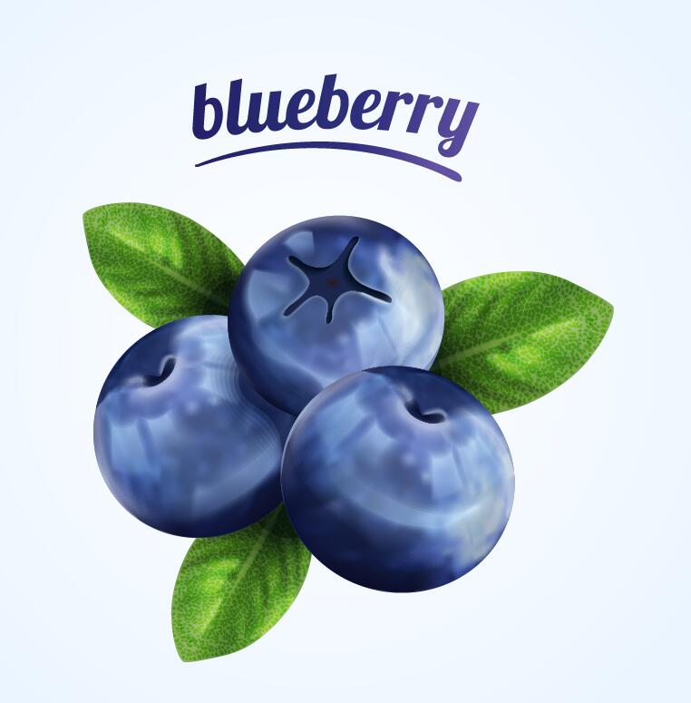 Blueberry illustration vector material