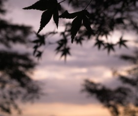 Blurred picture of violet sunset in outdoor nature Stock Photo