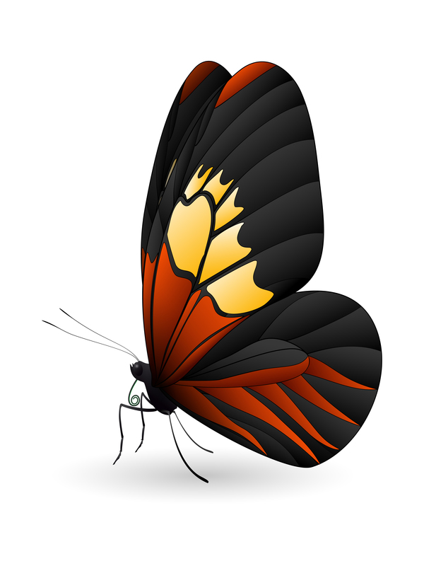 Butterfly beautiful design vector
