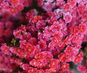 Closeup of blooming red flowers Stock Photo