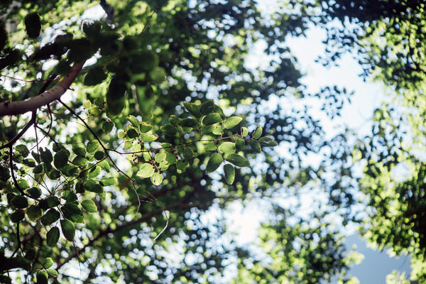 Closeup of green leaves on tree Stock Photo