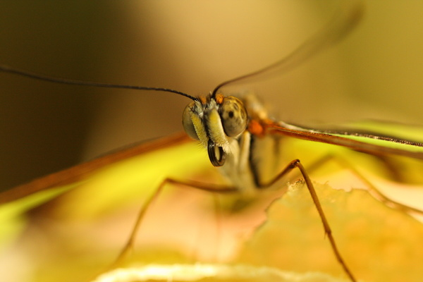 Closeup of insect face in nature Stock Photo
