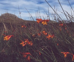 Closeup of wild flowers on meadow Stock Photo