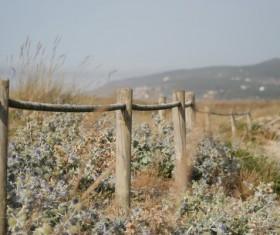 Closeup of wooden piles on empty wild land Stock Photo