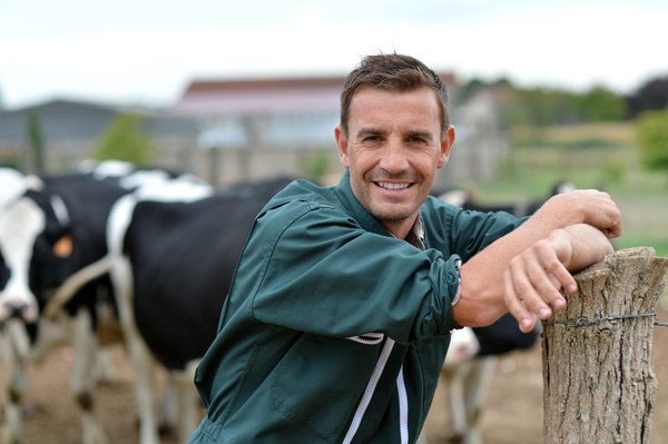 Dairy cattle farmers Stock Photo