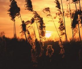 Dark sunset on meadow Stock Photo