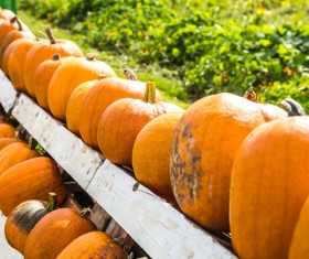 Different varieties of pumpkin Stock Photo 01
