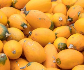 Different varieties of pumpkin Stock Photo 04