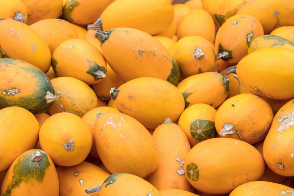 Different varieties of pumpkin Stock Photo 04