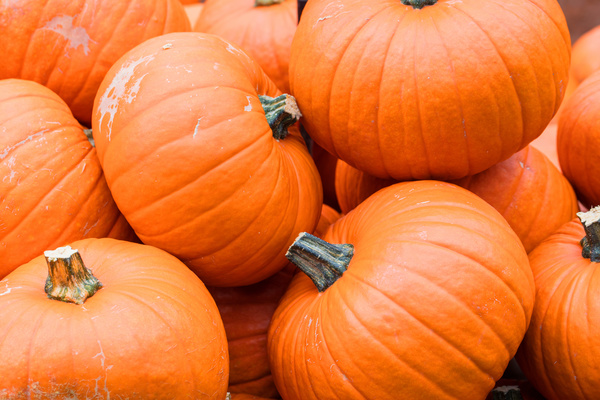 Different varieties of pumpkin Stock Photo 06