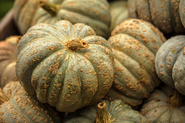 Different varieties of pumpkin Stock Photo 08