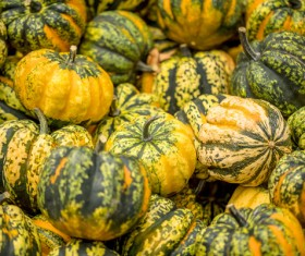 Different varieties of pumpkin Stock Photo 09