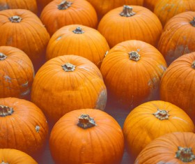 Different varieties of pumpkin Stock Photo 11