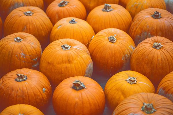 Different varieties of pumpkin Stock Photo 11