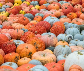Different varieties of pumpkin Stock Photo 12