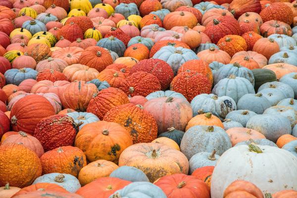 Different varieties of pumpkin Stock Photo 12