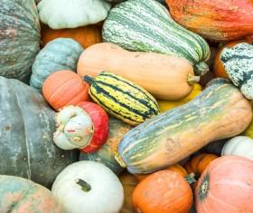 Different varieties of pumpkin Stock Photo 13