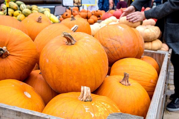 Different varieties of pumpkin Stock Photo 14
