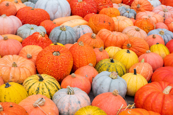 Different varieties of pumpkin Stock Photo 16