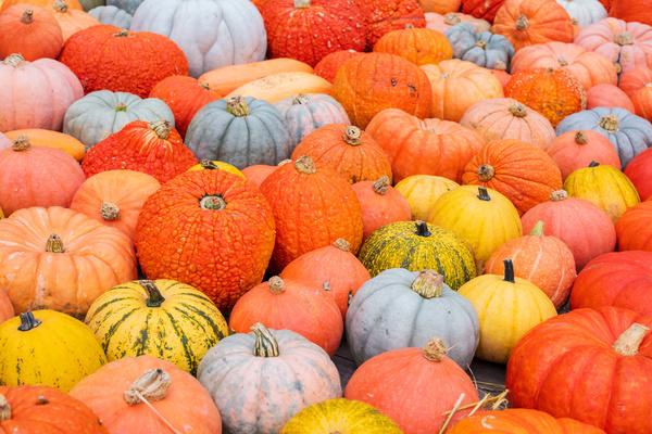 Different varieties of pumpkin Stock Photo 16