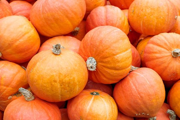 Different varieties of pumpkin Stock Photo 17