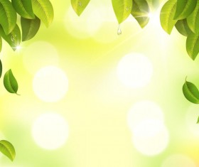 Green leaves with sunlight blurs background vector