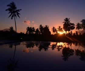 Morning sunrise coconut tree scenery Stock Photo