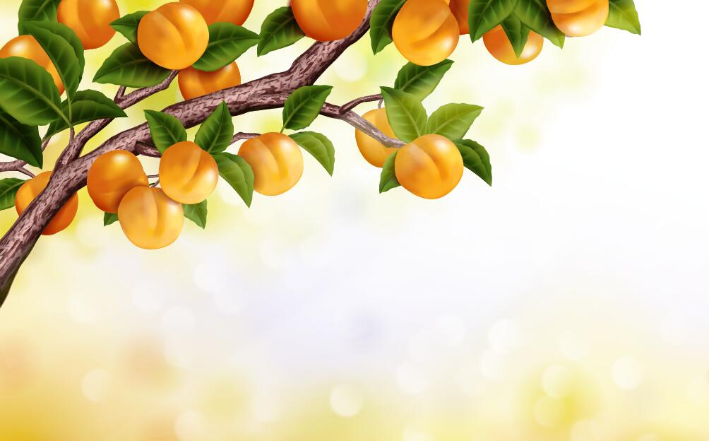 Peach branches with blurs background vector