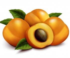 Realistic apricot illustration vector
