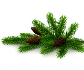 Spruce twig with cones on white background vector