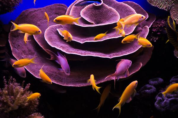 Submarine creatures and swimming fish Stock Photo