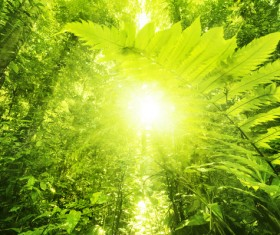 Sunlight through the forest Stock Photo 01