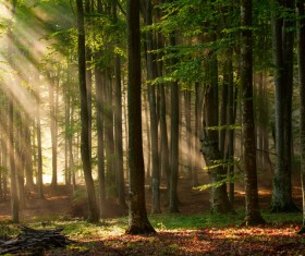 Sunlight through the forest Stock Photo 02