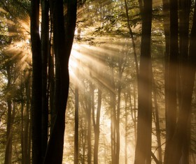 Sunlight through the forest Stock Photo 03