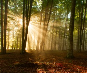 Sunlight through the forest Stock Photo 04