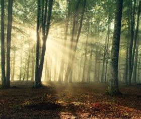 Sunlight through the forest Stock Photo 05