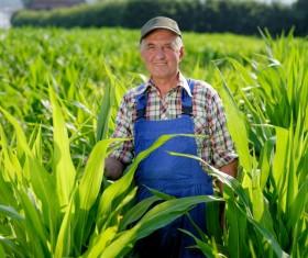 The farmer standing in the corn field Stock Photo