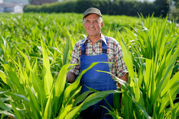 The farmer standing in the corn field Stock Photo