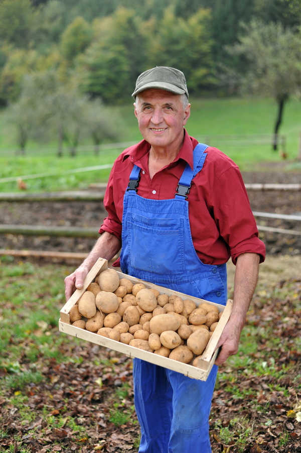 The old man holds the harvested potatoes Stock Photo