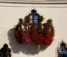 The walls are decorated with flowers Stock Photo