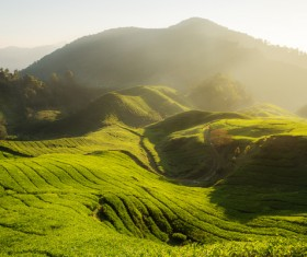 Undulating farmland on the hills Stock Photo