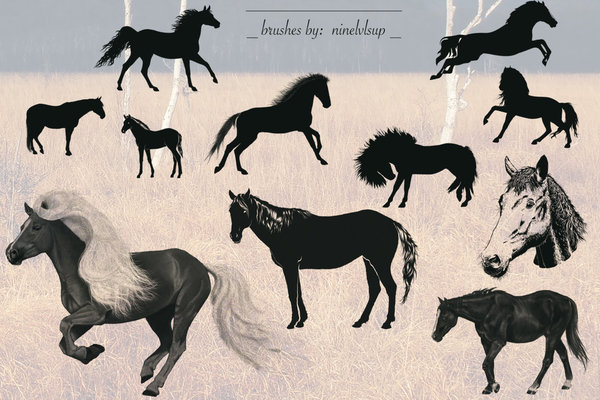 11 Kind Horse photoshop brushes