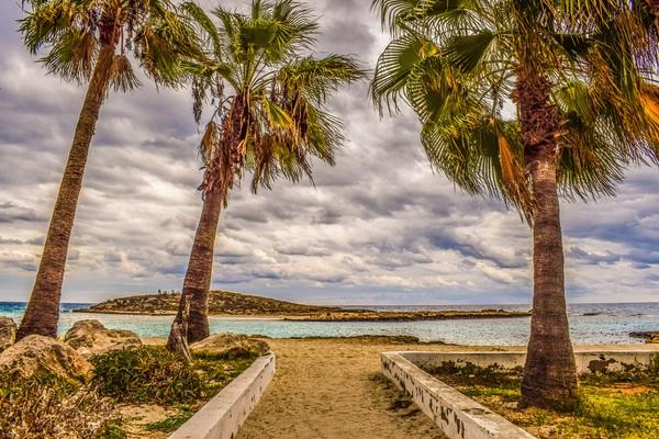 Beach palm tree Stock Photo