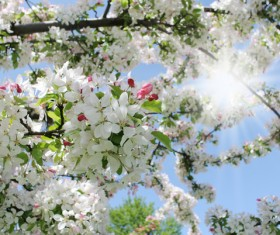 Beautiful blooming white flowers Stock Photo 05
