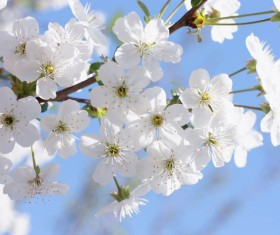Beautiful blooming white flowers Stock Photo 06